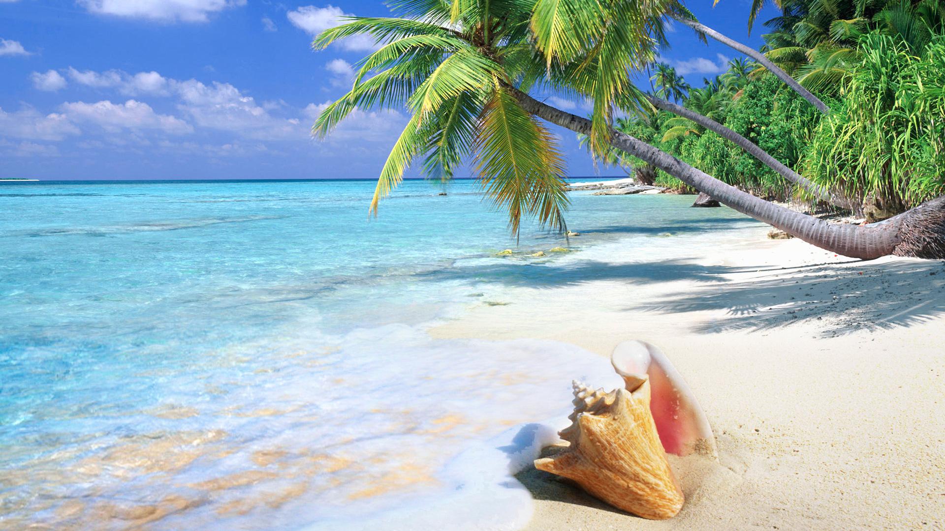 tropical-beach-shell-wallpaper